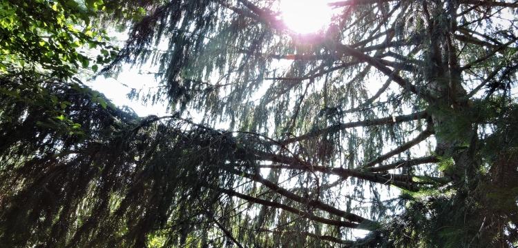 god-filtered-through-branches.jpg